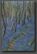 Bluebells in the woods 70x50cm